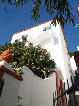 Kaprio apelsinai